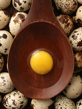 queensland-quials-eggs