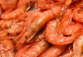 sos-wholesale-seafood-suppliers